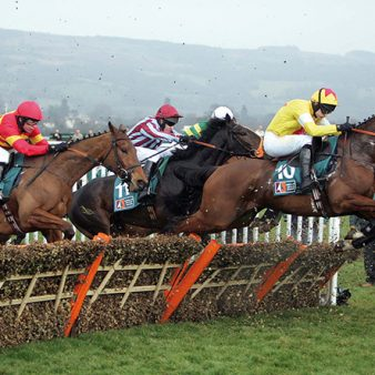 Watt Fences Horse Racing