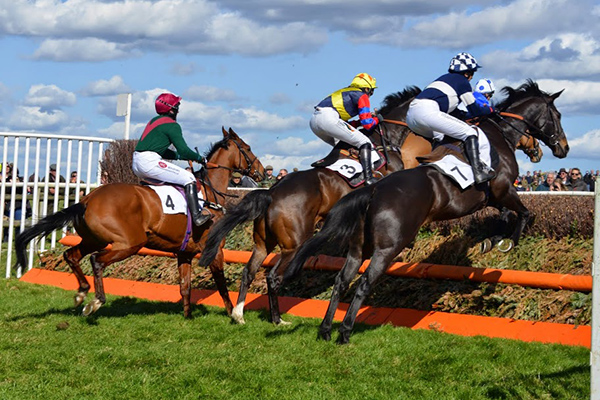 Watt fences Point to Point Fence
